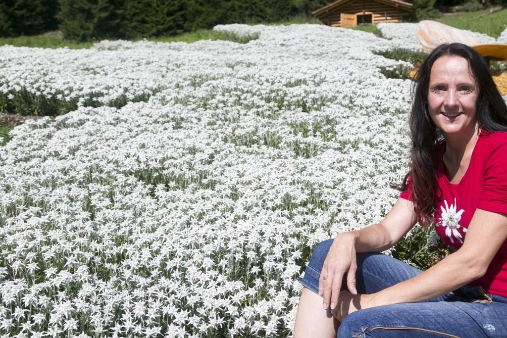 1.600 Edelweißstöcke pflanzte Tanja Senn mit ihrem Team vor 3 Jahren.  Bildnachweis: Sennhütte (Abdruck honorarfrei)