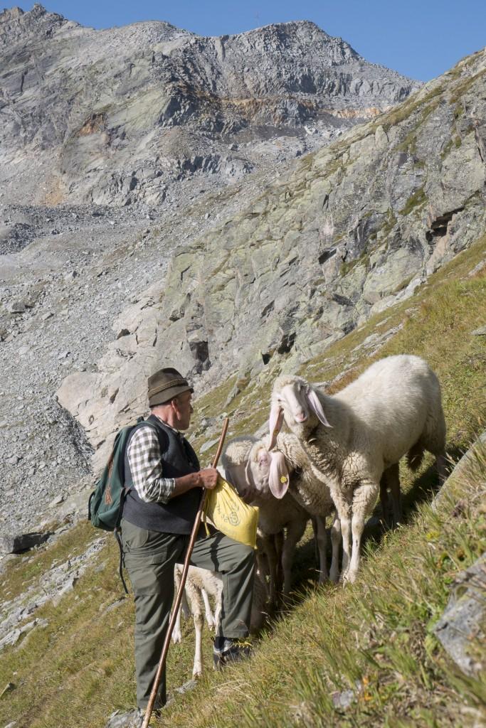 Der Hirte und seine Schafe sind für das allseits geschätzte Landschaftsbild verantwortlich. Bildnachweis: Tiroler Schafzuchtverband (Abdruck honorarfrei)