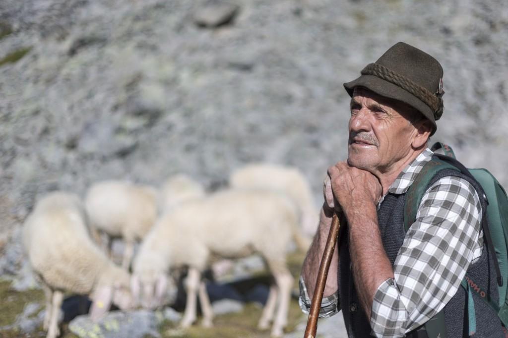 Hirte Fridolin Santer pflegt und schützt seine Schafherde im Ötztal.  Bildnachweis: Tiroler Schafzuchtverband (Abdruck honorarfrei)